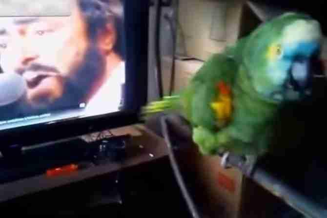 Pavaroti-i-papagaj-670x447_compressed