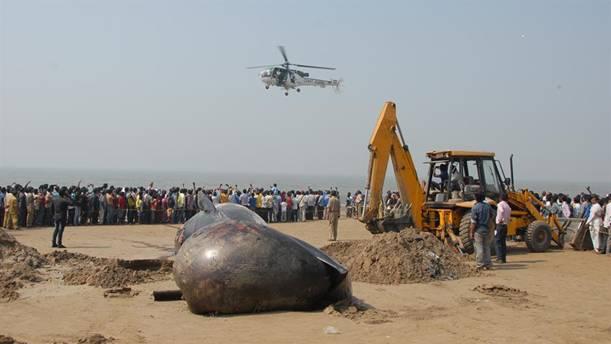 Indija: Rijetka vrsta kita pronađena nasukana na obali