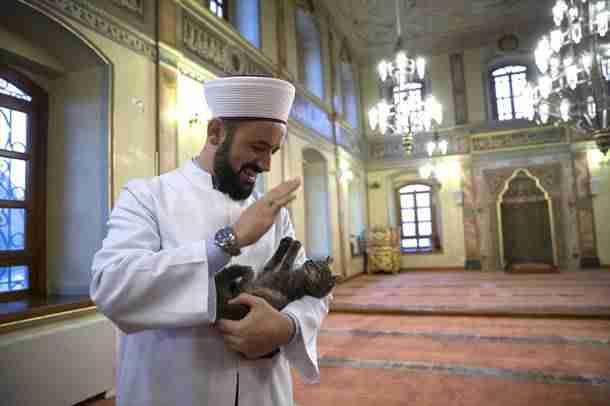 Imam koji je pustio mačke u džamiju: Bog nam je povjerio životinje na čuvanje