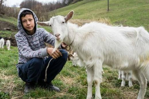 Jasmin Hačkčić: Od skromne želje koja je rasplakala region do stada od 25 koza