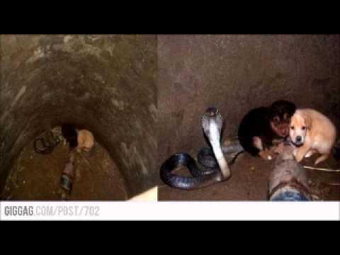 NESTVARNO: Kobra branila štence koji su upali u bunar čitava dva dana, dok pomoć nije stigla!