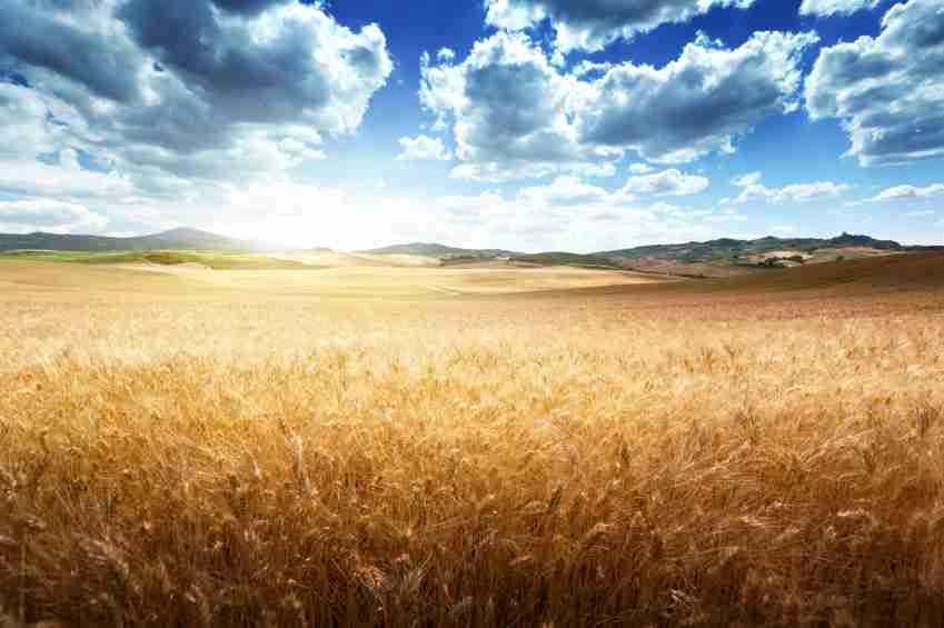 KAD VAM UZMU ZEMLJU ZNAJTE DA STE ČLAN UNIJE: Europske prakse otimanja zemlje – Tjeranje malih poljoprivrednika i seoskih zajednica sa njihove zemlje je politika EU