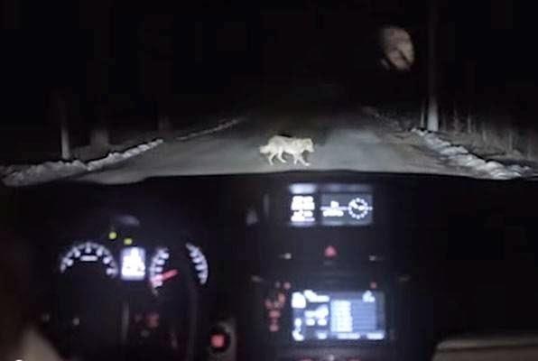 AUTOMOBIL UDARIO PSA: A potom je uslijedio šok… Ovaj snimak automobila koji udara u psa ipak nije ono što se čini