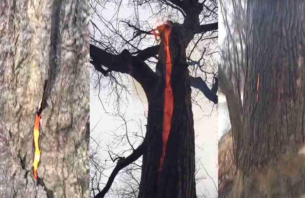 drvo-gpri-iznutra_compressed