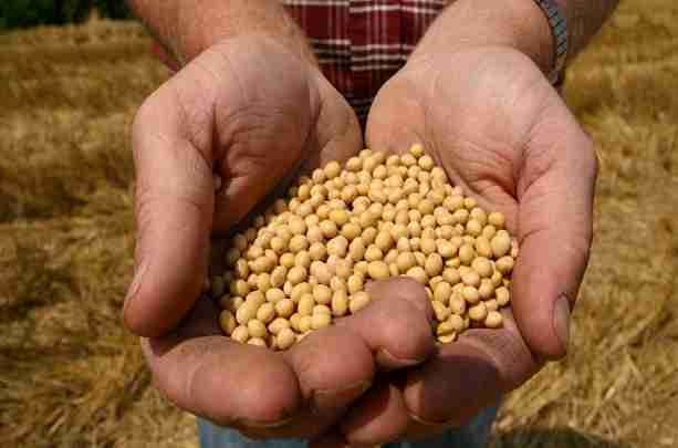 KO IMA SJEME, IMA ŽIVOT: Nacistički Bayer kupuje sotonski Monsanto – završni udarac hemijskog pakla!