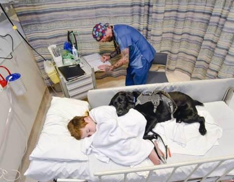 NAJBOLJI PRIJATELJ NA SVETU: Pas koji je odbio da dečaka pusti samog na operaciju!