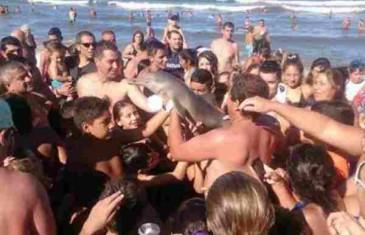 Užas: Turisti skrivili smrt malenog delfina, trebao im za selfija