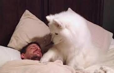 Vrijeme je za jutarnju šetnju, ali gazda još spava. Ono što je pas uradio će vam uljepšati dan.