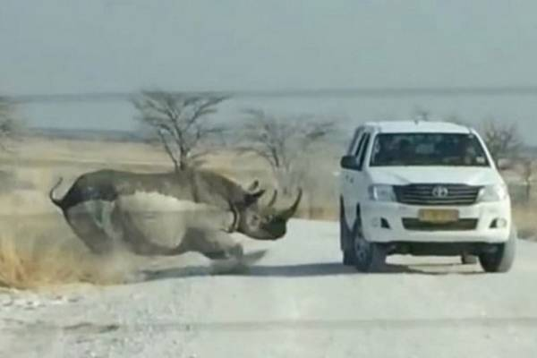 Zastrašujući trenutak u kojem se nosorog zaletio u automobil pun turista!