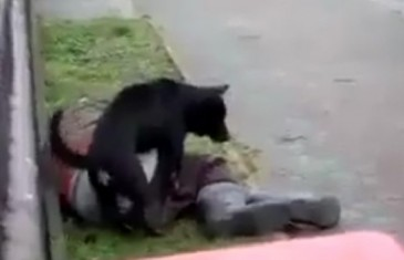 Pas nag*zio pijanog Bosanca nasred ulice (VIDEO)