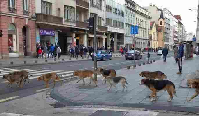 Pseća parada u centru Sarajeva