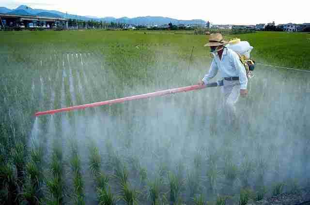 ALARMANTNO OTKRIĆE: Poremećaji pri rođenju djece širom svijeta, uzrokovani pesticidima a ne Zika virusom