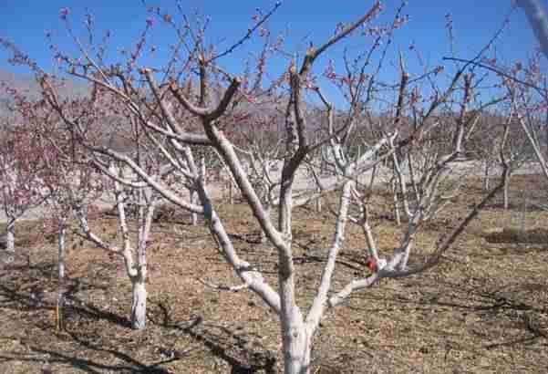 PRVI PUT NAKON 120 GODINA: Proljeće treba stići 20. marta, evo zbog čega!