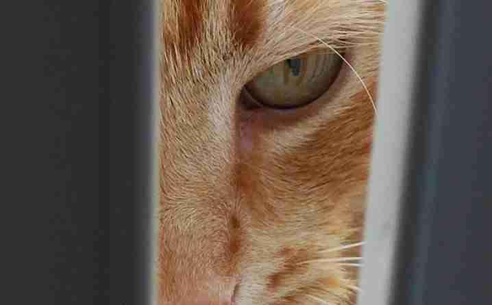 """URNEBESNO: Bračni par pozvao policiju jer ih """"mačka drži kao taoce""""  (VIDEO)"""