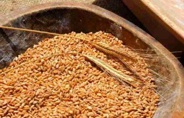 Upozorenje: Pravi razlog zašto je pšenica otrovna za ljudski organizam će vas šokirati! Nije gluten!