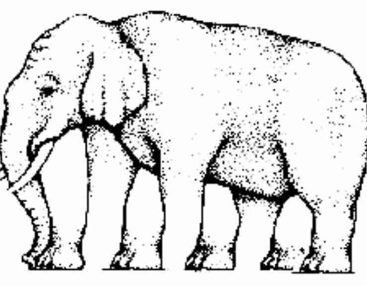 Cijeli svijet pokušava da odgonetne koliko ovaj slon ima nogu: Kladimo se da ćete i vi odgovoriti pogrešno