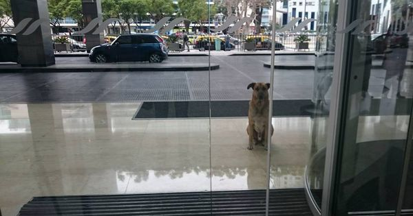Suze na aerodromu: Pas umro od tuge kad je shvatio da je ostavljen!
