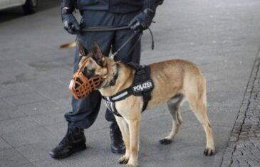Kako psi mogu da nanjuše koronu: Hoće li nas mirisati na aerodromima, stadionima, graničnim prelazima…