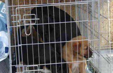 Sarajka dobila donaciju za brigu o psima, a onda ih zaključala bez struje, vode, hrane…